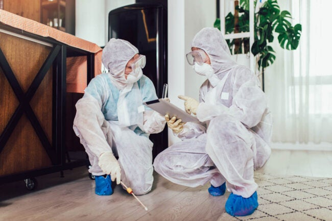 How to Get Rid of Bed Bugs Hire a Professional