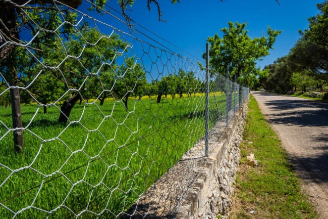 How to Get Rid of Foxes Fence in a Garden
