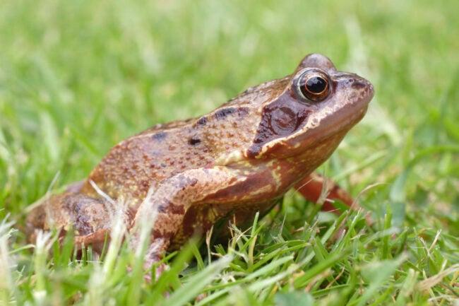 如何摆脱青蛙