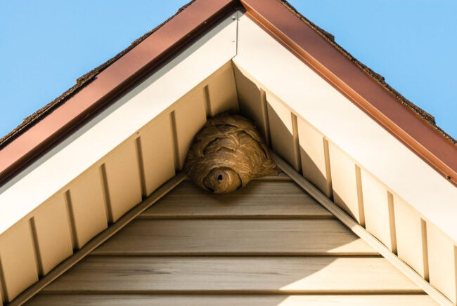 How to Get Rid of Hornets Identify the Nest