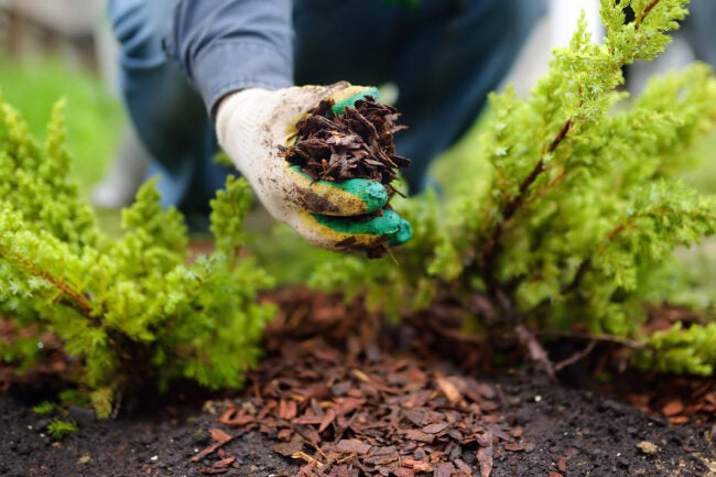 How to Get Rid of Pill Bugs Remove any Decaying Mulch
