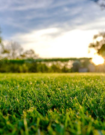 Lawn Aeration Cost How to Calculate
