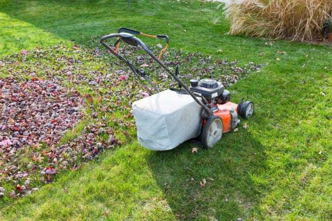 Mulching Leaves How to Mulch Leaves