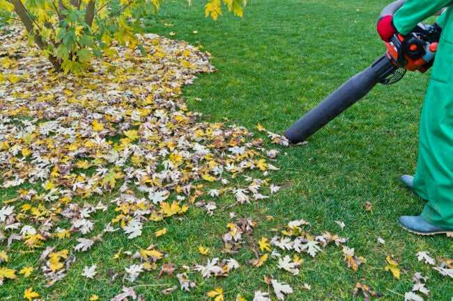 Mulching Leaves Other Methods
