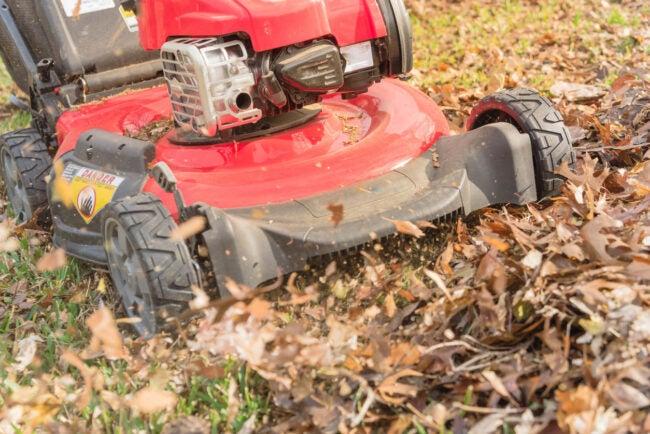 Mulching Leaves Shred Leaves