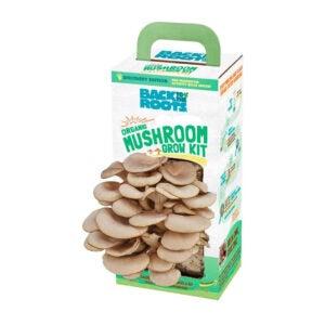 最好的父亲节礼物选择:回到根源有机蘑菇种植套件