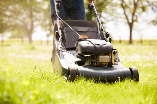 The Best Lawn Mower Brands Options