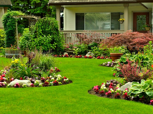 The Best Place to Buy Outdoor Plants Online Options