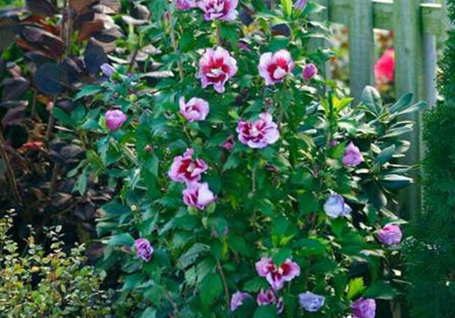 The Best Places to Buy Outdoor Plants Online Option Bluestone Perennials