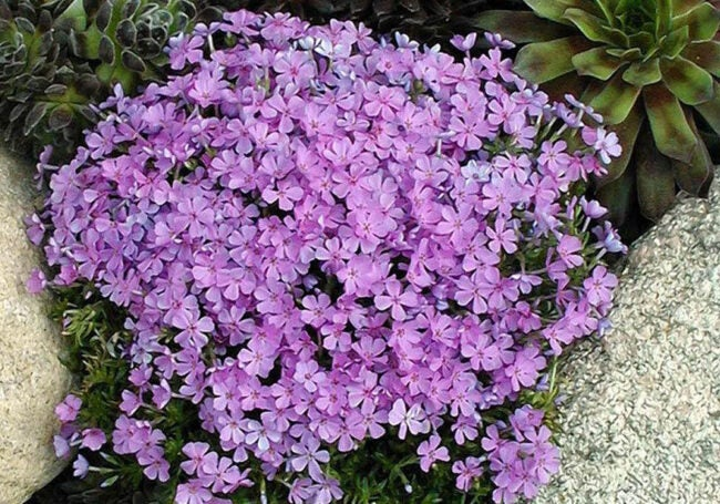 The Best Places to Buy Outdoor Plants Online Option Great Garden Plants