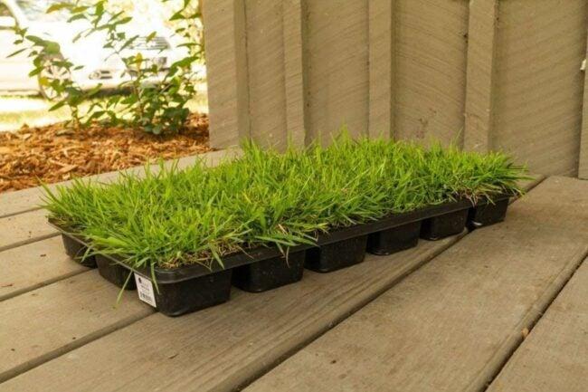 The Best Grass For Sandy Soil Option