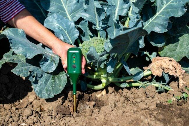 最好的土壤测试套件选择
