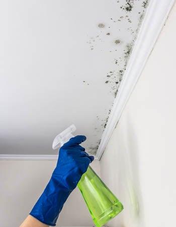 What Kills Mold Bleach