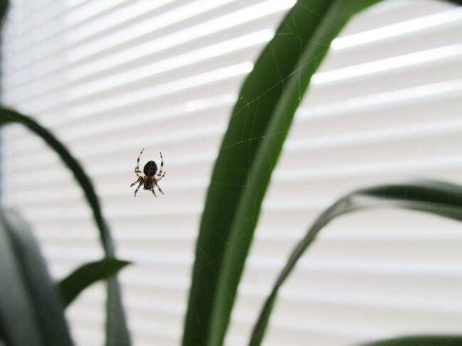 为什么我家庭气候中有很多蜘蛛是控制的