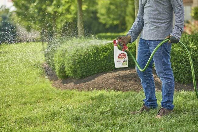 Best Tick Spray For Yard Options