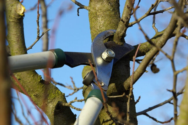 best time to trim trees