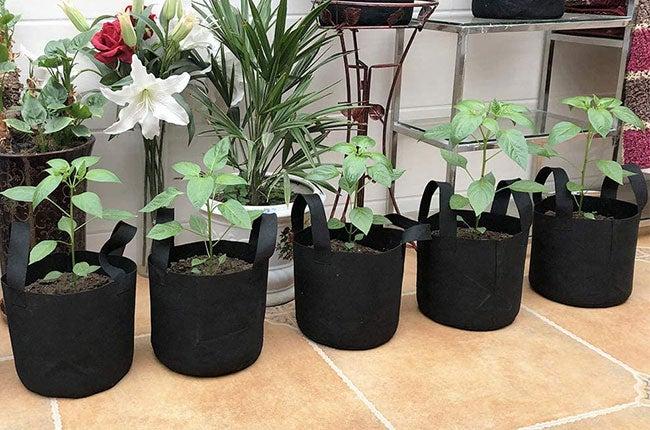 gardening with grow bags