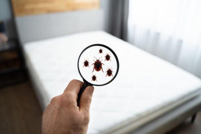 床虫治疗成本