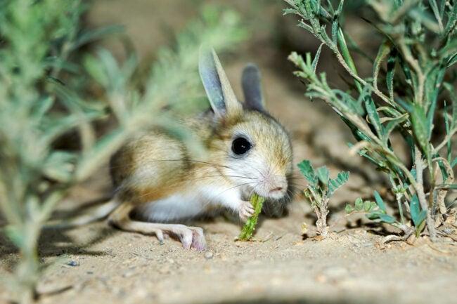 The Best Rabbit Repellent Options