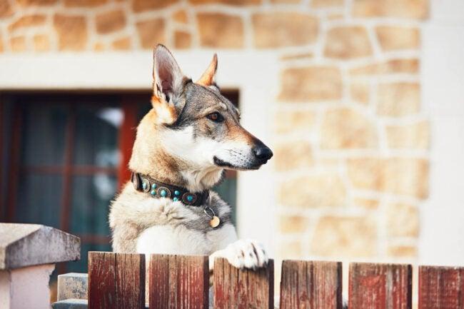 Does Having a Dog Deter Burglars