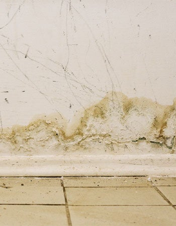 Does Homeowners Insurance Cover Mold Flood Insurance