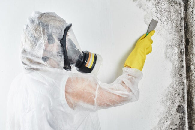 Does Homeowners Insurance Cover Mold Hire a Professional
