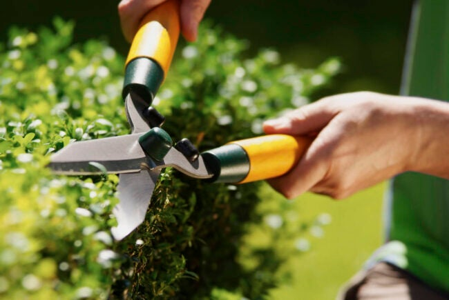 How Much Does Landscaping Cost How to Save Money
