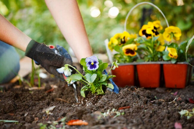 How Much Does Landscaping Cost Types of Landscaping
