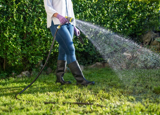 How to Get Rid of Crane Flies Avoid Overwatering the Lawn