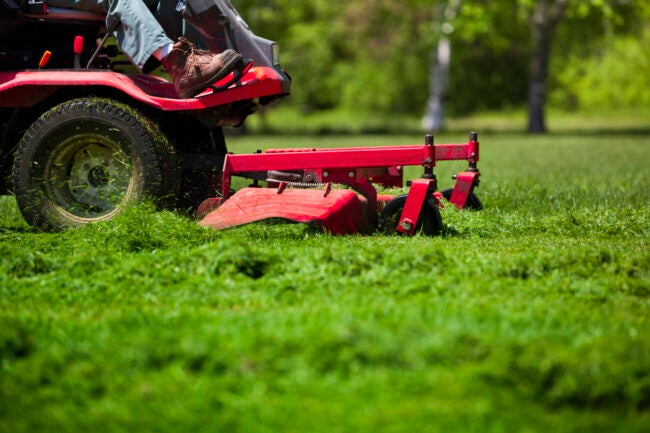 Lawn Care Cost How to Save Money