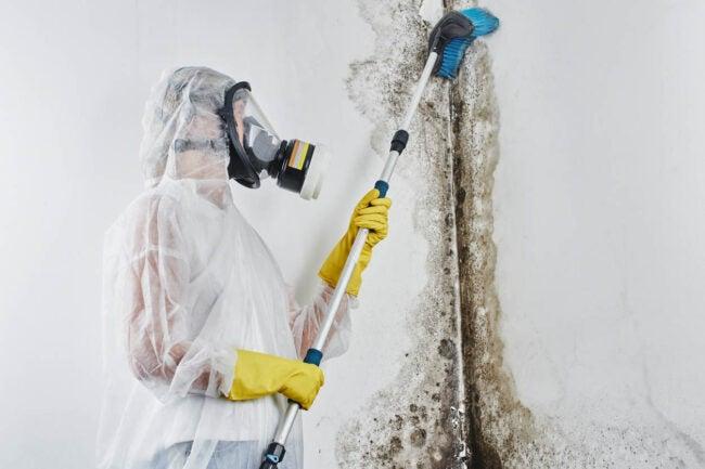 Mold Mites Contact a Professional