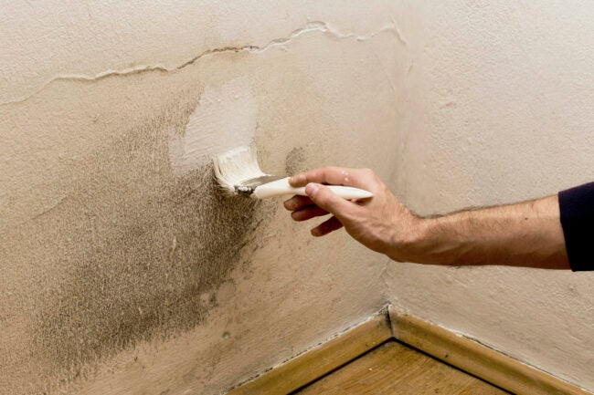 Paint Over Mold