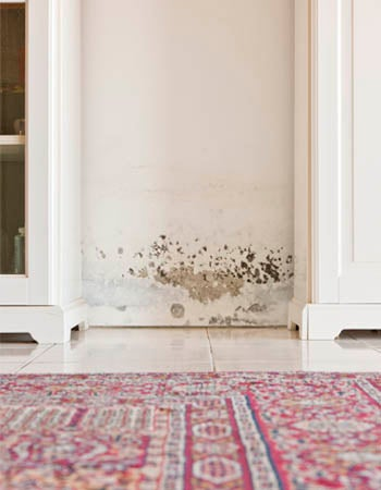 Paint Over Mold Will Not Destroy Mold