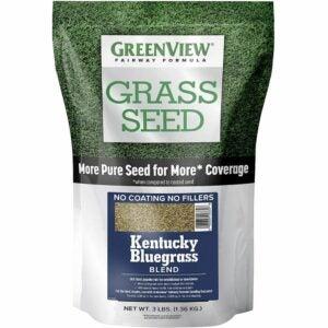 The Best Kentucky Bluegrass Seed Option: GreenView 2829352 Kentucky Bluegrass Blend Grass Seed