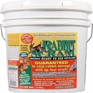 The Best Rabbit Repellent Option: Enviro Pro 11025 Rabbit Scram Repellent