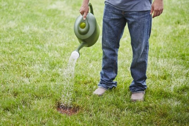 The Best Tall Fescue Grass Seed Option