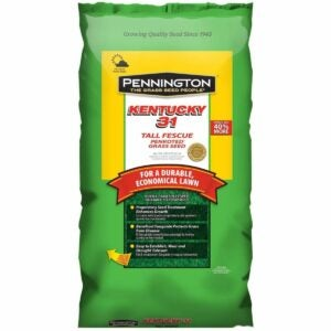 The Best Tall Fescue Grass Seed Option: Pennington Kentucky 31 Tall Fescue Grass Seed
