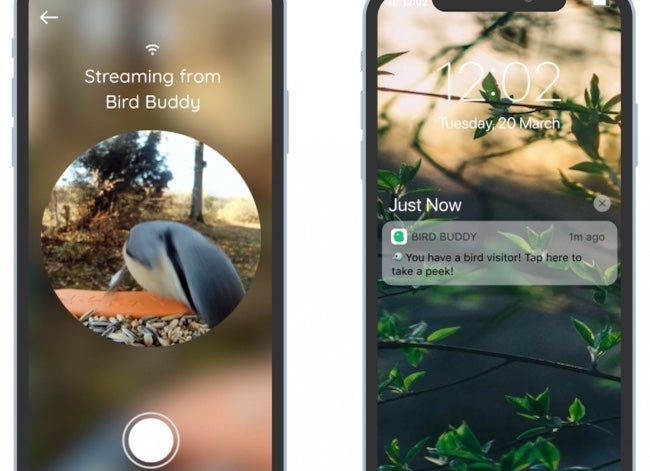 bird buddy bird feeder with camera