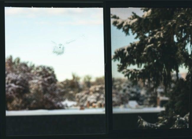 bird hit window left mark