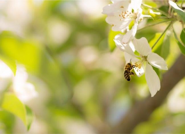 carpenter bee vs bumblebee