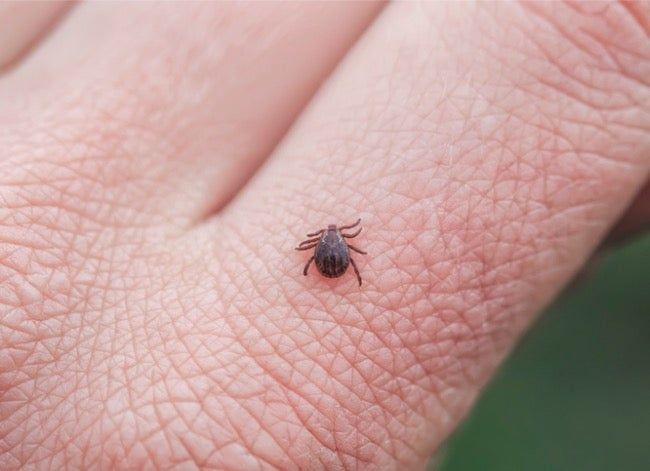 ticks are bad this year