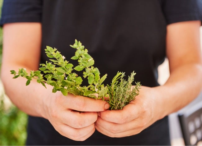 creeping thyme lawn harvest