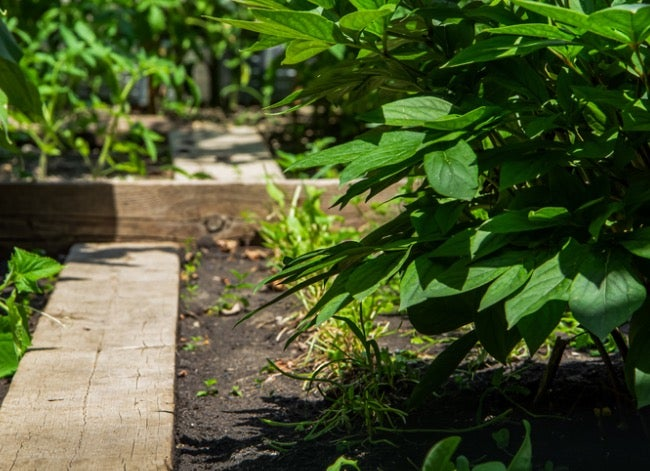 food forest - how to plant a food forest at home