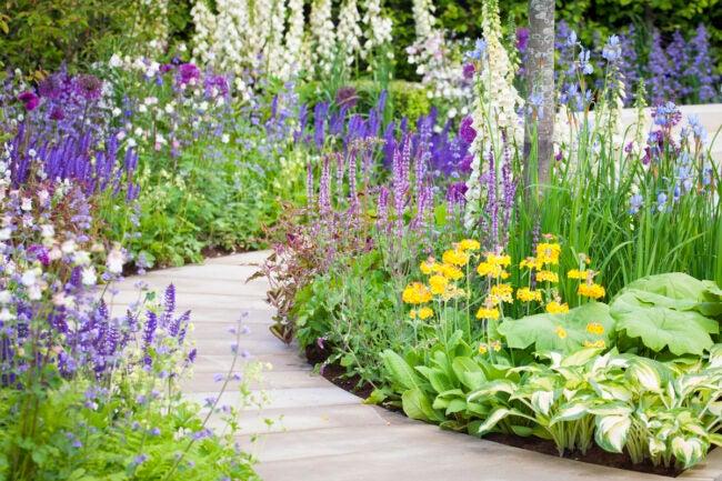 biennial plants