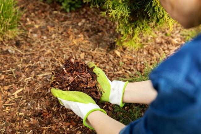How Much Is a Yard of Mulch