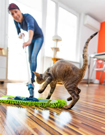 How To Get Rid Of Cat Pee Smell Before You Begin
