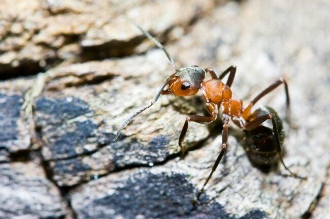 Termites Vs. Ants