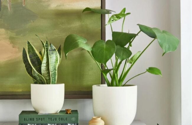 The Best Places to Buy Flowers Option The Sill