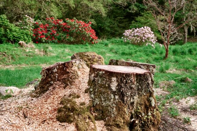 Tree Stump Removal Cost Do I Need to Remove a Tree Stump