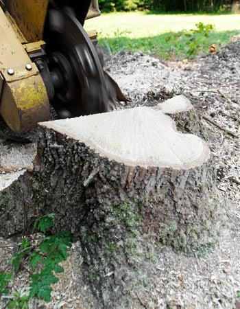 Tree Stump Removal Cost Factors in Calculating the Cost
